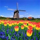 טיסות ישירות לאמסטרדם החל מ-342$ בלבד!